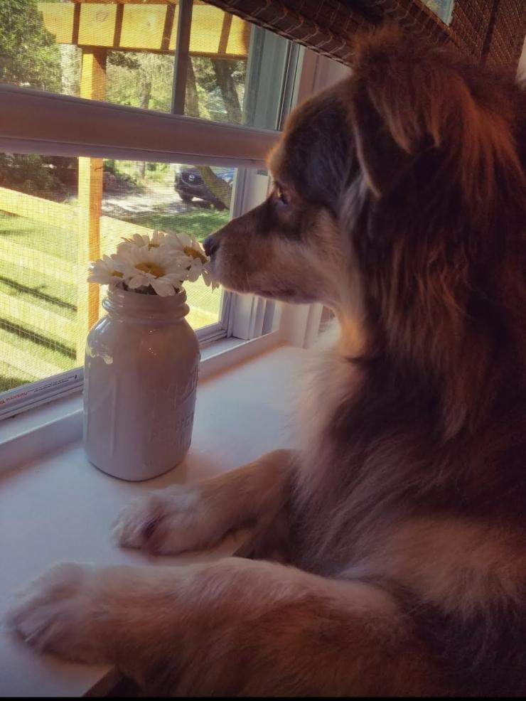Quality Of Life In Home Pet Euthanasia Service Llc Dr Debbie Ellinger