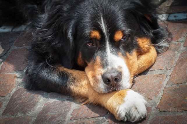 animal bricks canine close up