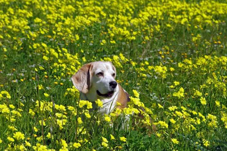 animal bloom blossom cute