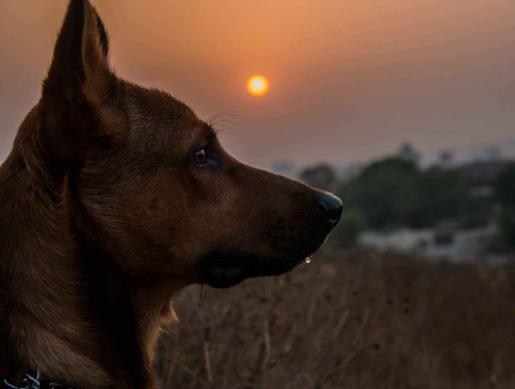 animal photography blur close up dawn